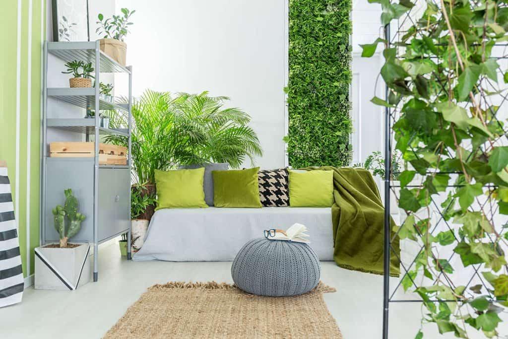 izbove rastliny sluzia ako prirodne cisticky vzduchu