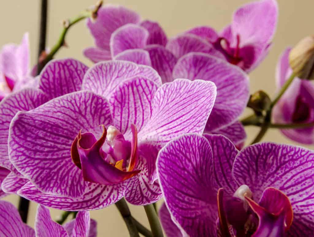 Akú starostlivosť vyžadujú orchidey?