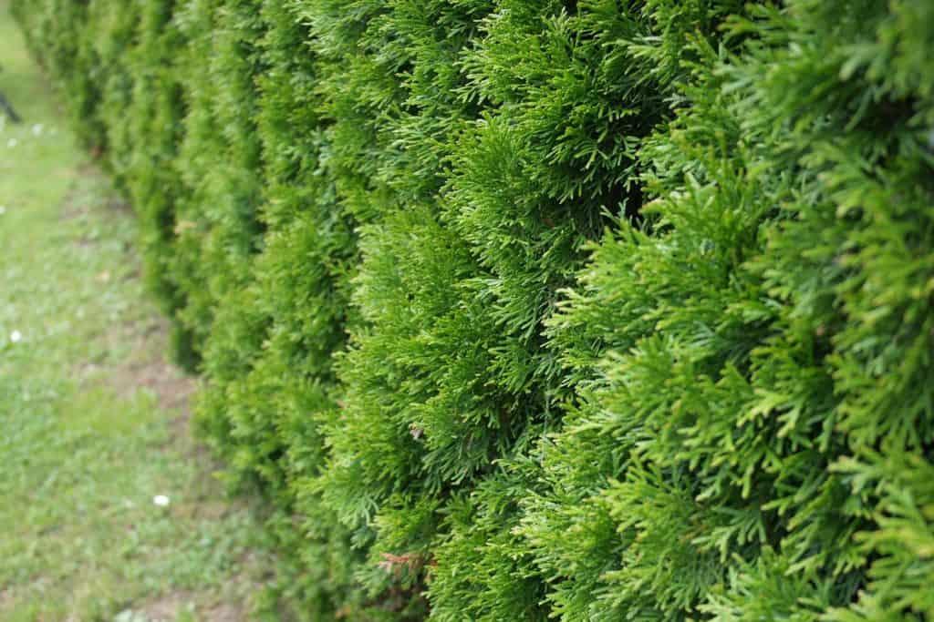 plant-163393_1920
