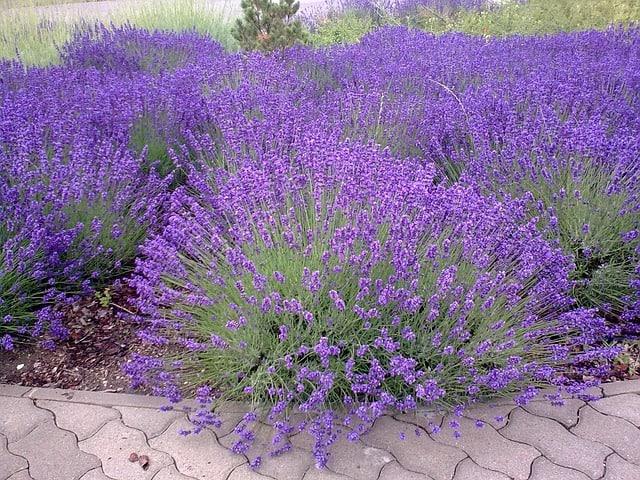 Krajšia záhrada – čo tak skalka?