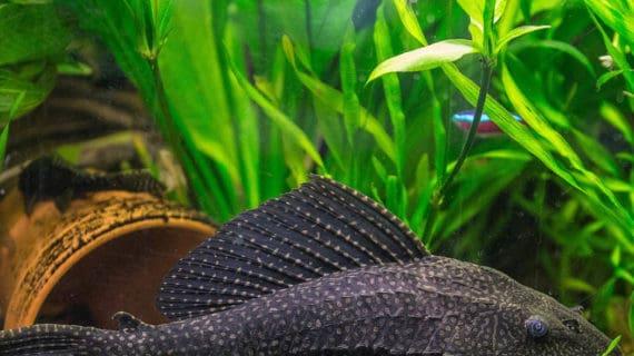 Ryba v akváriu