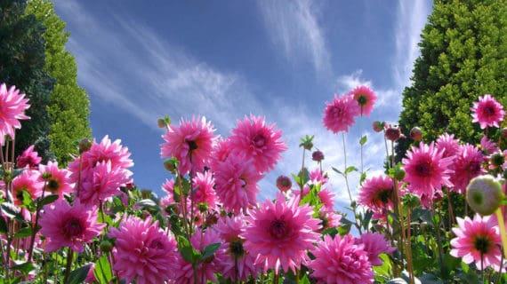 Kvety - permakultúrna záhrada