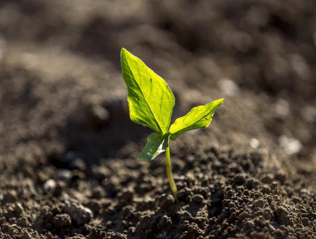 Pôda s rastlinkou