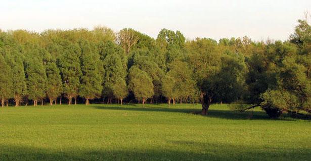 vidiecka-zahrada