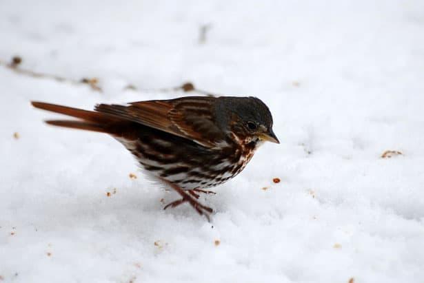 Prikrmovanie vtáctva v zime