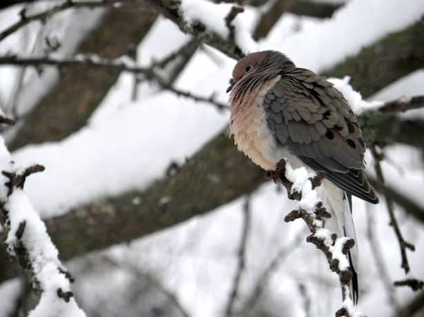Prikŕmovanie vtáctva v zime