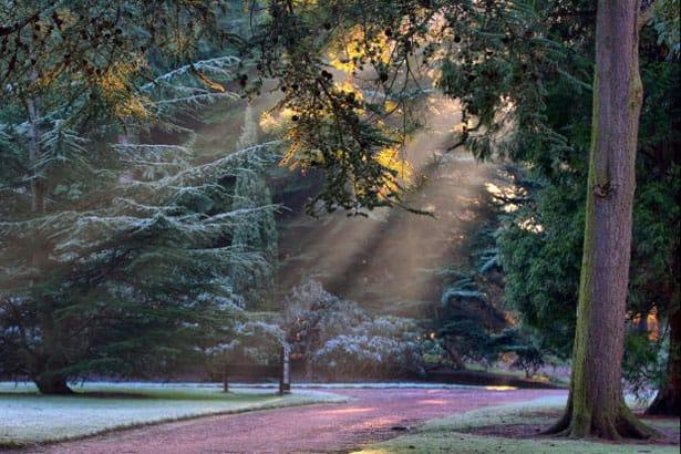 Zimná záhrada - zazimovanie