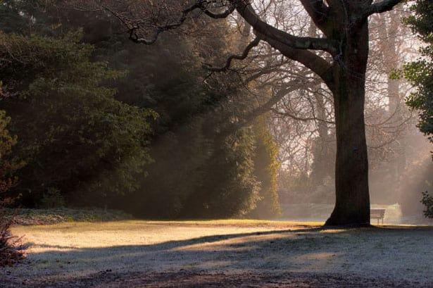 Zimné ráno - zazimovanie