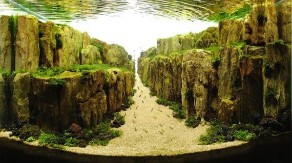 Umelecké diela v akváriách inšpirované prírodou