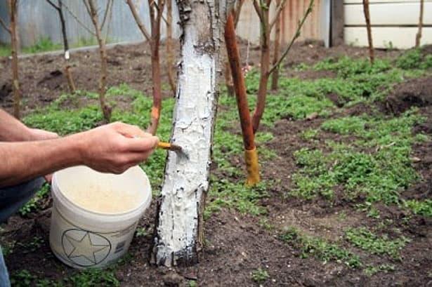 bielenie-stromov