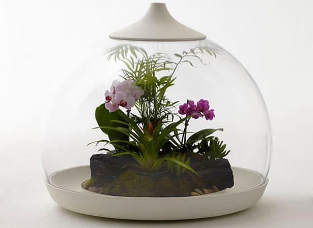 Záhradka Biome od Samuela Wilkinsona