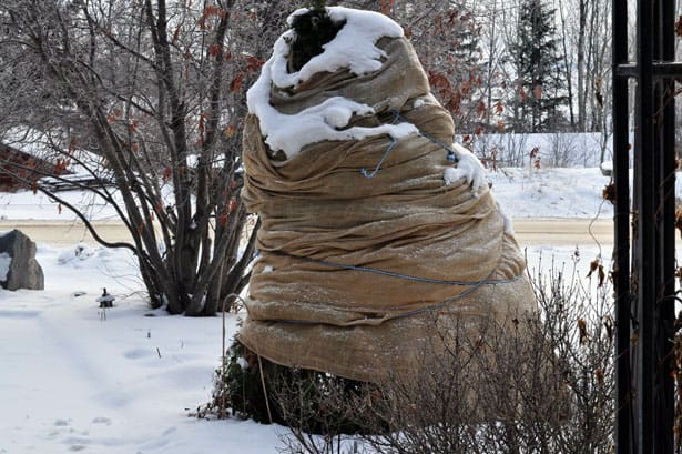 ochrana-drevin-rastlin-proti-zamrznutiu