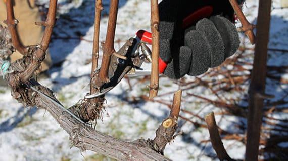 Rez drevín - február v záhrade