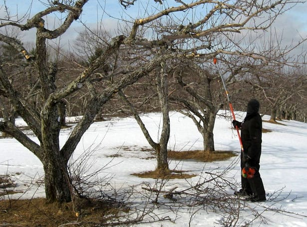 zimny-rez-ovocnych-drevin1