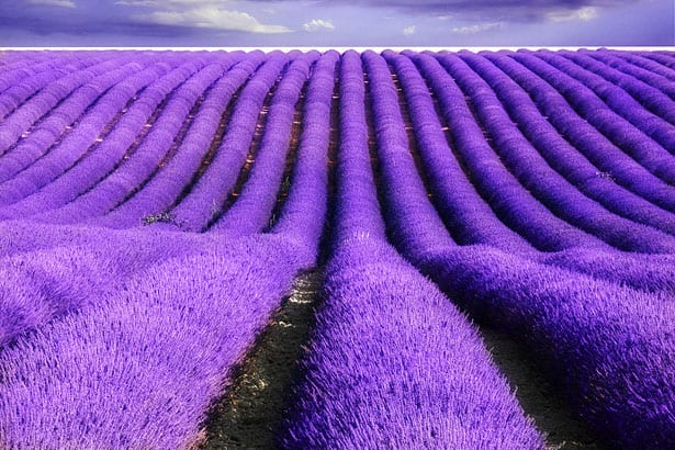 provence-lavender-fields