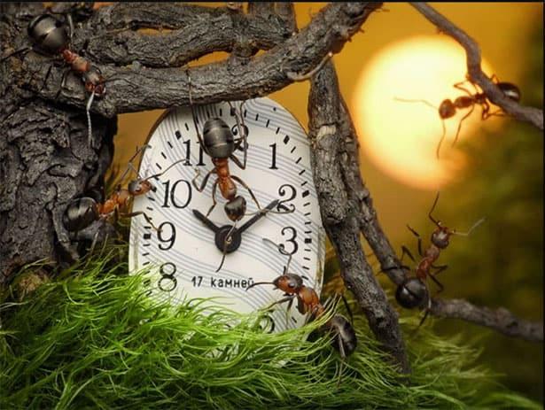 hodiny-mravce