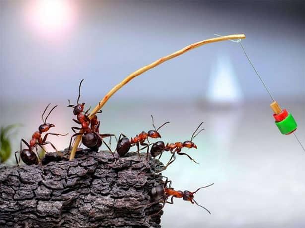 mravce-na-rybacke