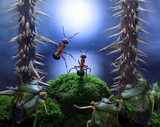 mravce-pavlov-fotky