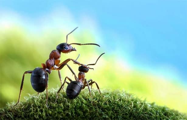 mravce-pavlov
