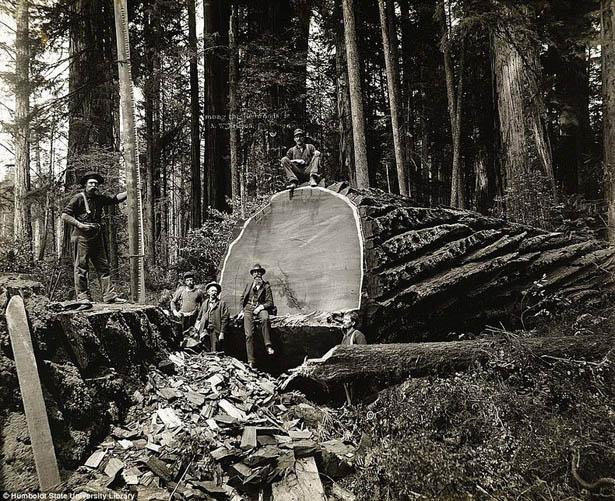 pilenie-stromov