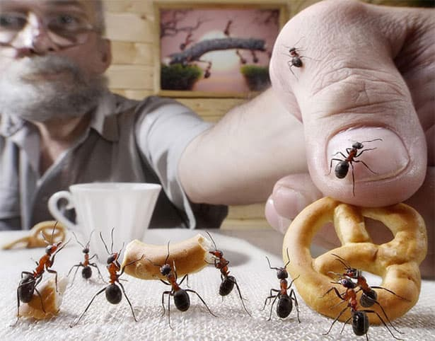 ranajky-mravce