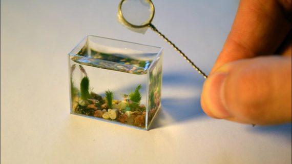 Najmenšie akvárium na svete