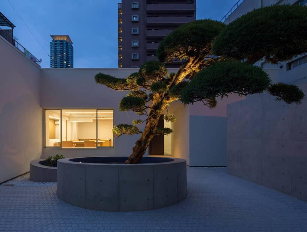 Podocarpus house