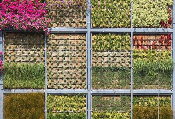 Vertikálna záhrada v San Vicente
