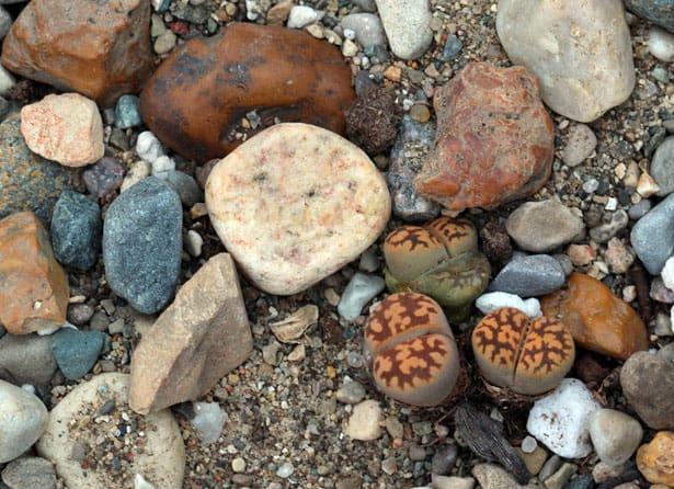 zive-kamene