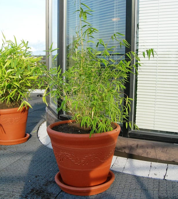 bamboo-container