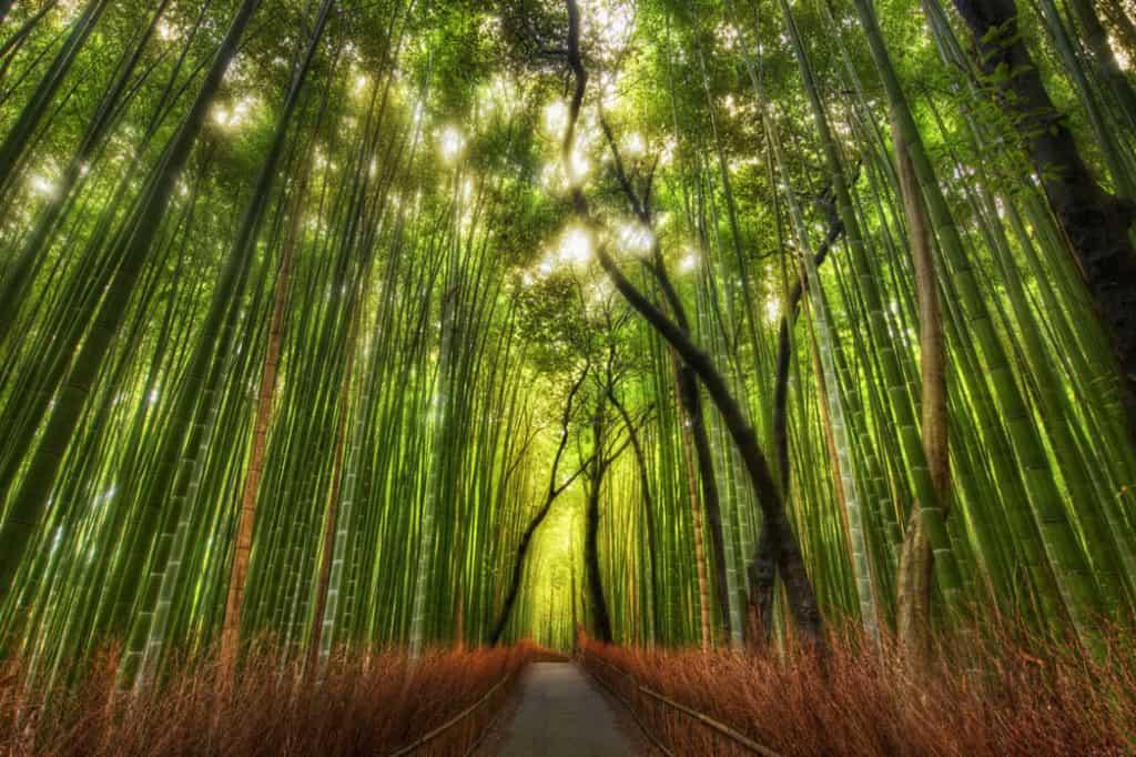 Bambusy