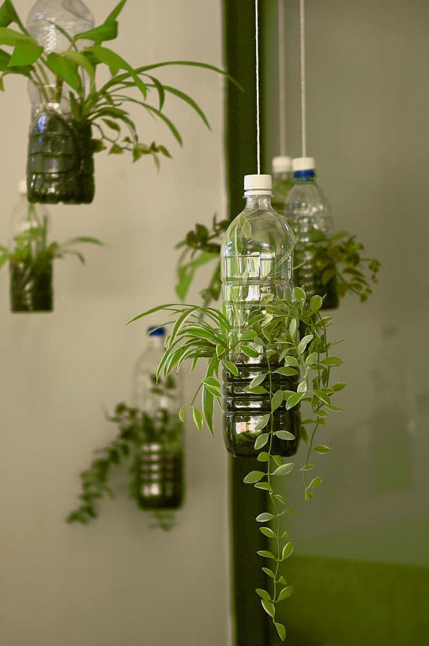 plants-bottle