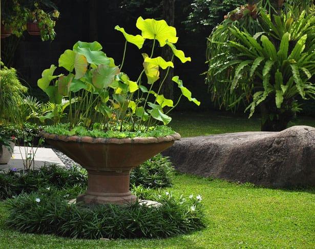 tropical-garden-style