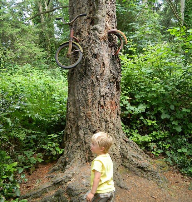 bicykel-v-strome