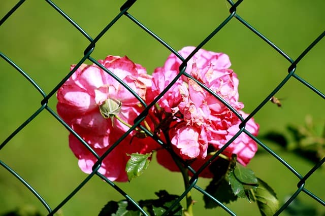 fence-181394_640