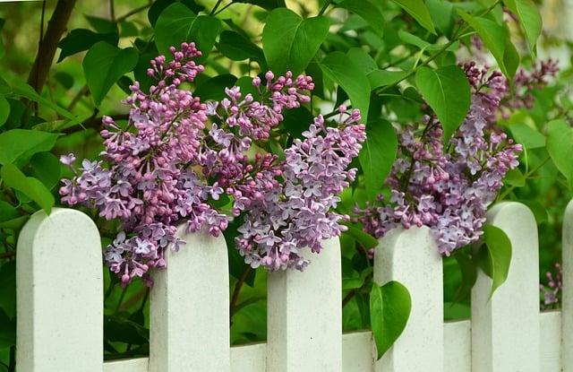 Aký plot si vybrať?