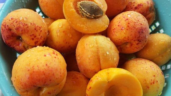 Ako pestovať broskyne a marhule