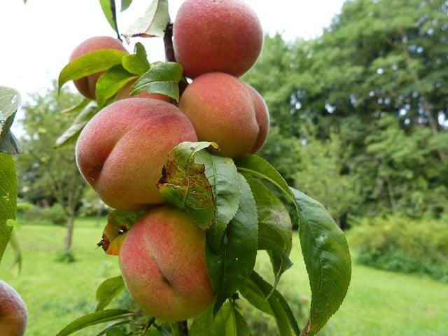 peaches-634599_640