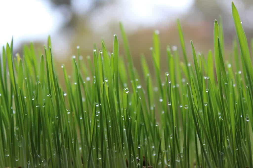 Ako si vybrať zavlažovací systém do záhrady?