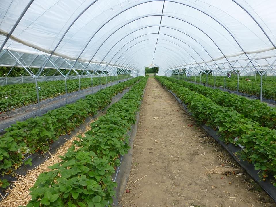 greenhouse-395492_960_720