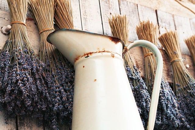 lavender-570572_640