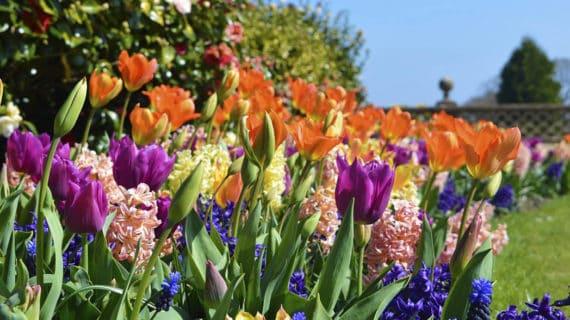 praktické tipy do záhrady