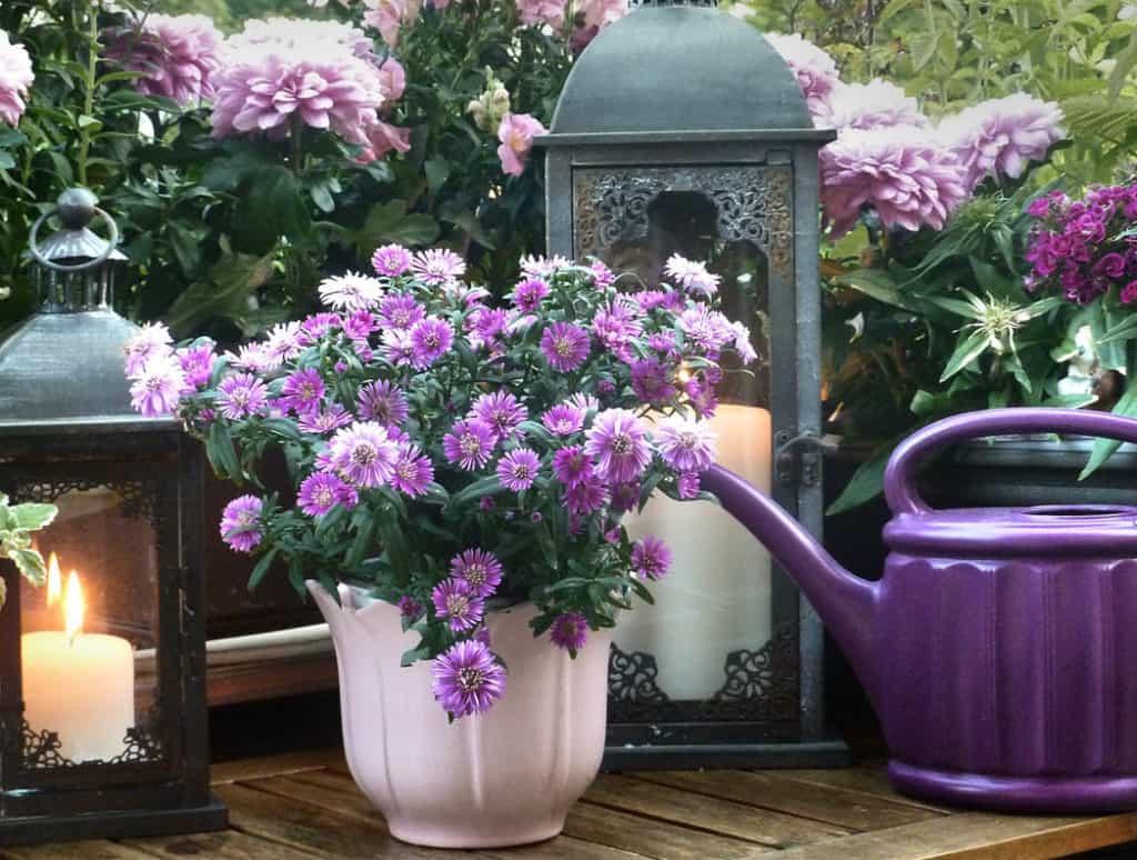 Jeseň – obdobie chryzantém