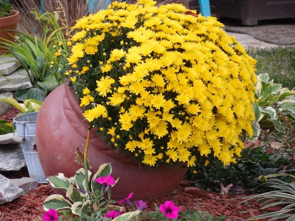 kvety na hroby