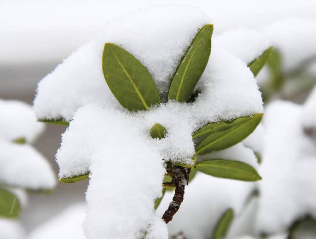 Januárové tipy pre záhradkárov