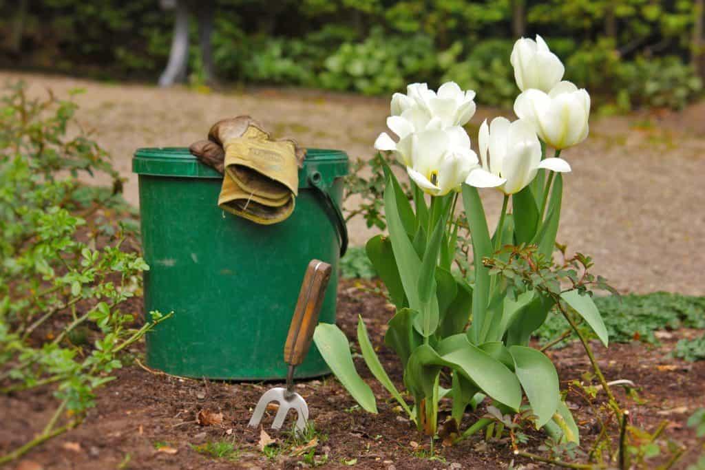 Výsadba kvetín - máj v záhrade