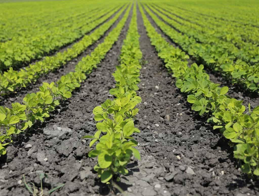 Bio hnojivá ako náhrada za chemické hnojivá