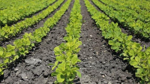 S bio hnojivami sa vyhnete škodlivinám v záhrade
