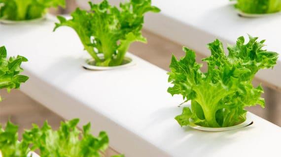 pestovanie zeleniny bez pôdy
