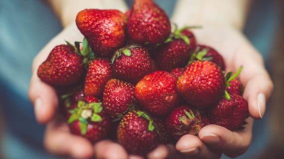 Ako zúžitkovať jahody